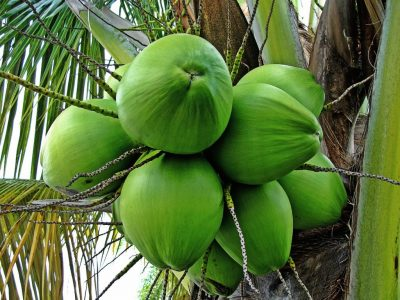 hvordan spiser man kokosolie